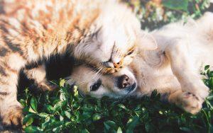 cat-dog-αρτηροωετ
